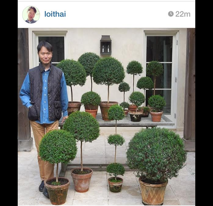 How A Single Picture Started Topiary Mania The Enchanted Home