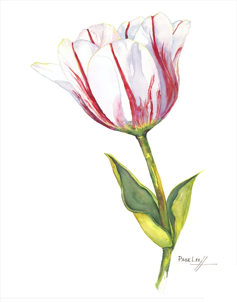 LeeP-Tulip_Sorbet_11x14_477_1024x1024