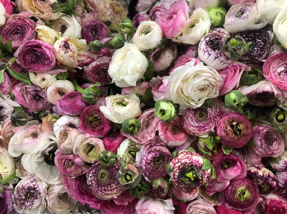 Celebrating flowers and the NY Flower district!
