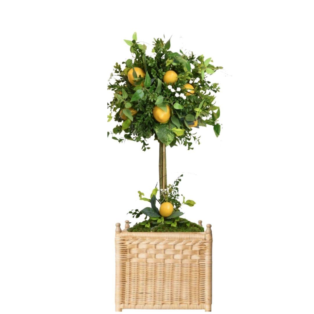 Gorgeous lemon topiary in wicker box planter (medium)