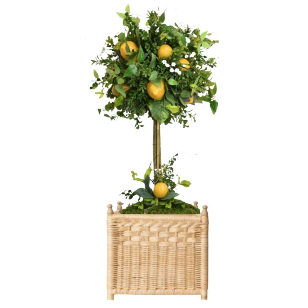 Gorgeous lemon topiary in wicker box planter (large)