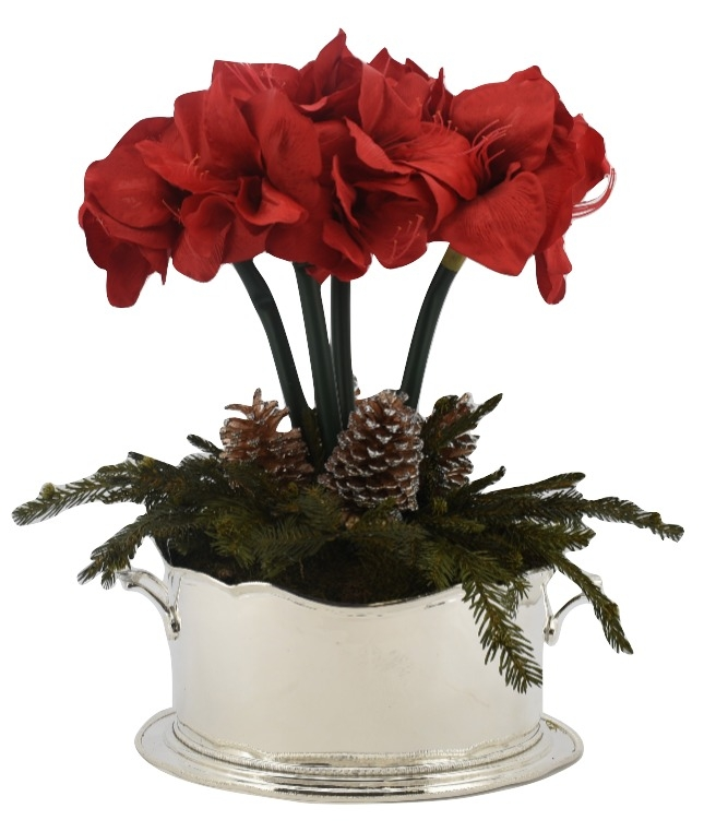 Holiday Red Amaryllis Plant