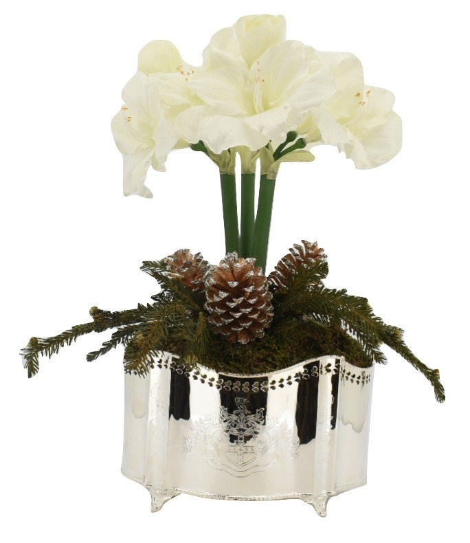 Holiday White Amaryllis Plant