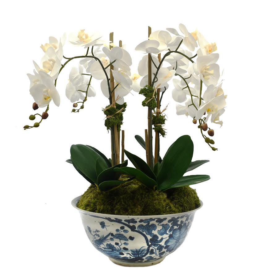 Four Stem White Orchid in Antique Pheasant Bowl