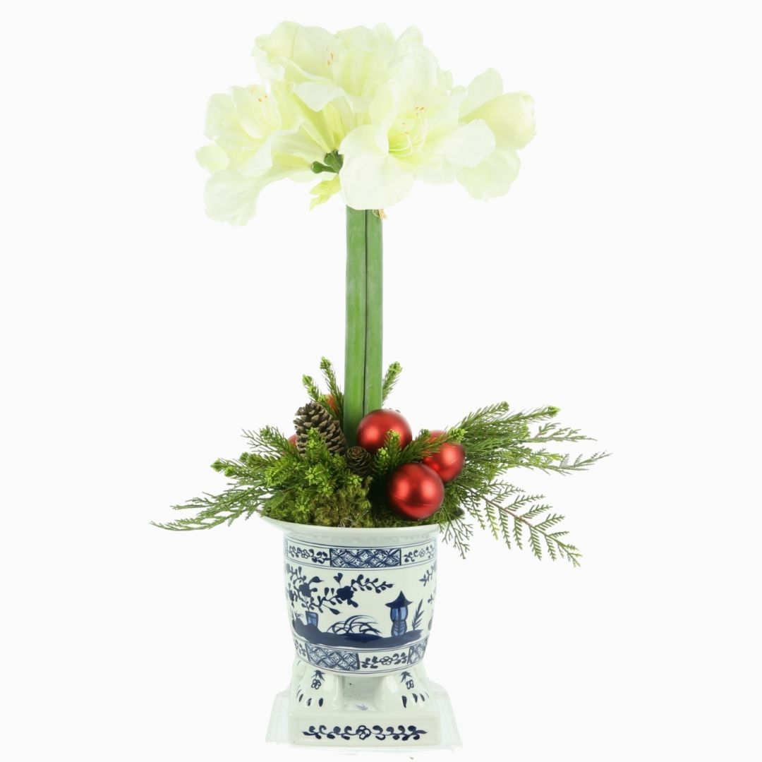 Stunning new white amaryllis arrangement in footed planter