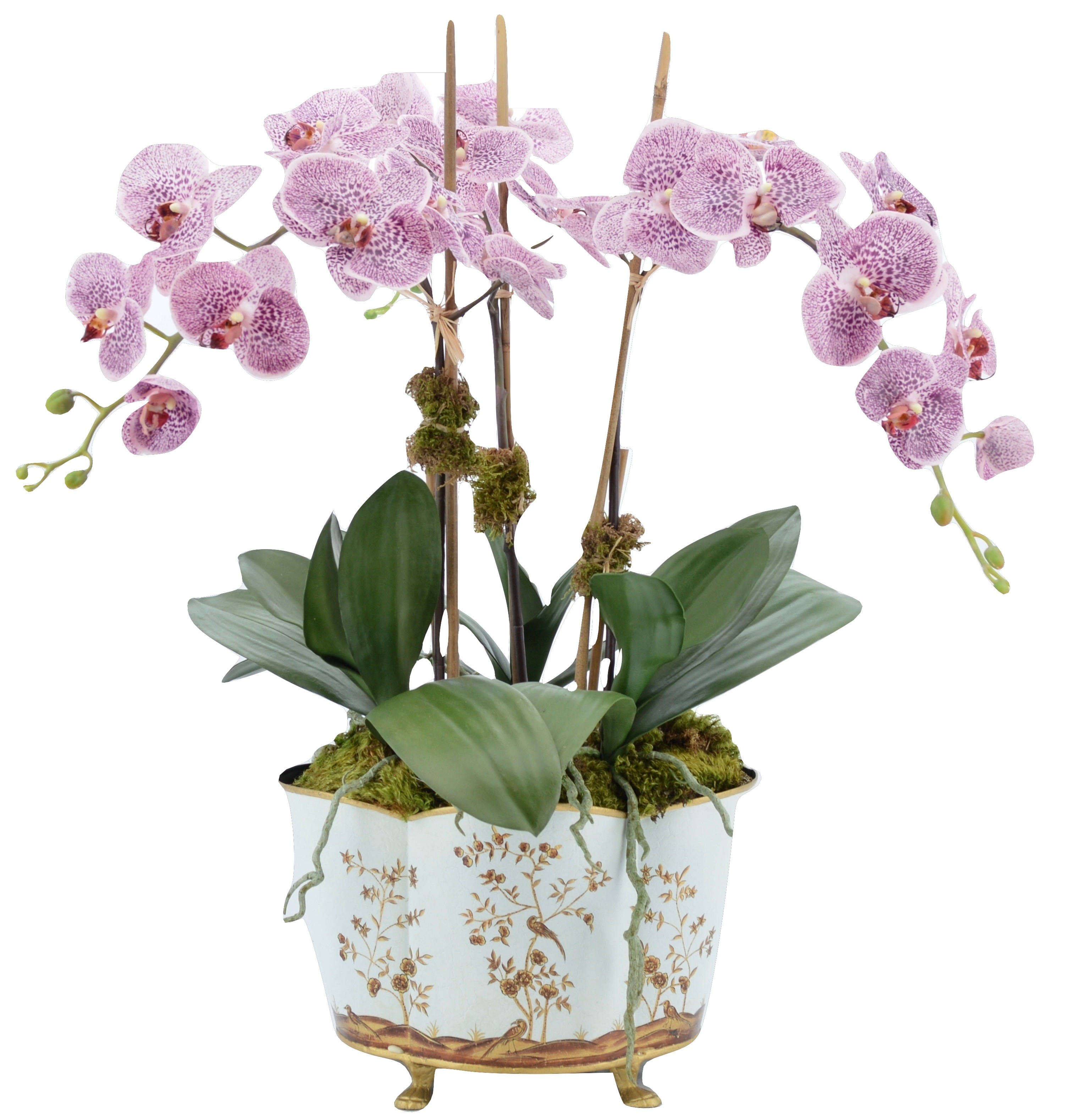 Incredible large pink orchid plant