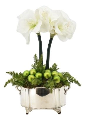 Incredible 2 Stem White Amaryllis