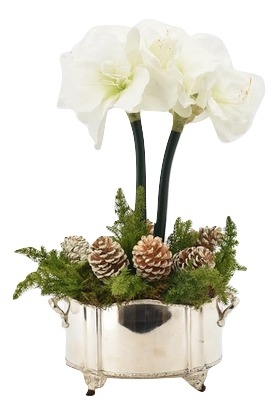 Incredible 2 Stem White Amaryllis and Pine Cones