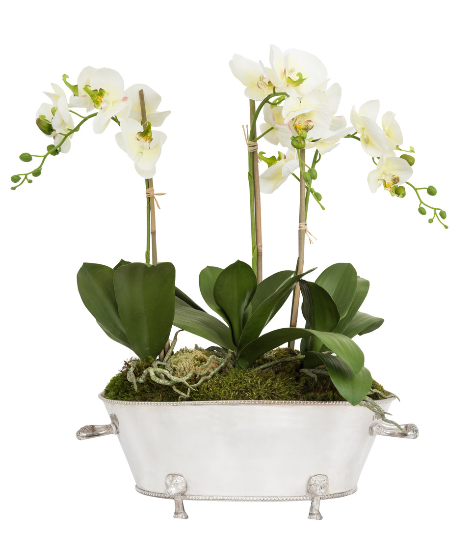 Three Stem Orchid in Oversized Silver Planter