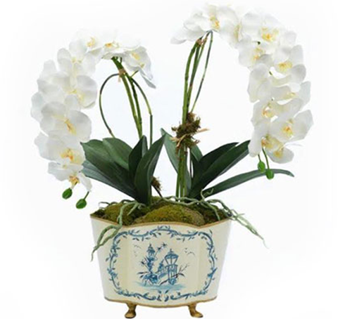 Two Stem White Orchid In Blue And Ivory Chinoiserie Planter