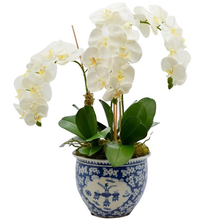 INCREDIBLE THREE STEM ORCHID PLANT IN SCALLOPED PORCELAIN PLANTER