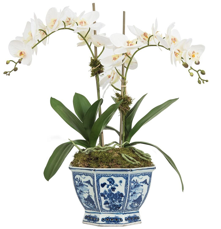 AMAZING FOUR STEM ORCHID IN FISHBOWL