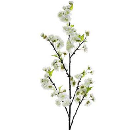 Gorgeous tall cherry blossoms 1 dozen mightylinksfo