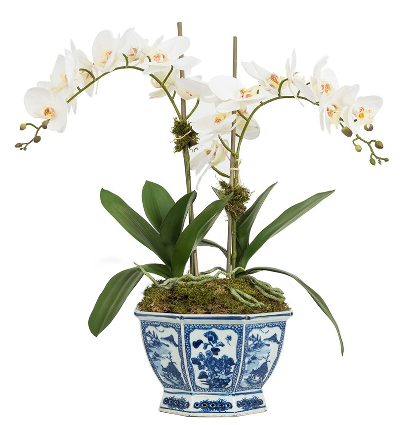 GORGEOUS TWO STEM WHITE ORCHID